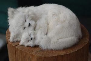 猫の親子の昼寝