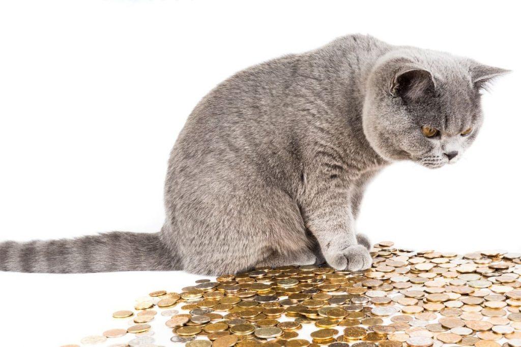 ねこ猫と硬貨